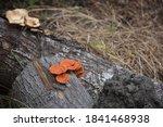 Close Up.brown Mushrooms ...