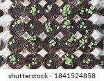 Plant The Seedlings In...