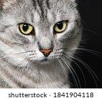 Cat Portrait Close Up. Amazing...