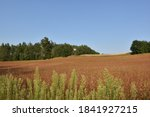 Hunting Tower On Red Field Of...