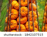 A Pile Of Mini Pumpkins...