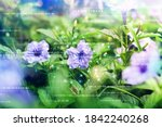 plants background with... | Shutterstock . vector #1842240268