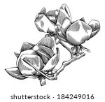 flowering branch of magnolia.... | Shutterstock .eps vector #184249016