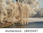Frozen Weeping Willow In The...