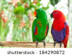 a pair green and red of solomon ...   Shutterstock . vector #184290872