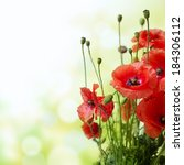 red poppy is isolated on a... | Shutterstock . vector #184306112