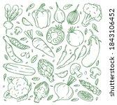 hand drawn doodle vegetable... | Shutterstock .eps vector #1843106452
