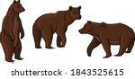 brown bear vector illustration... | Shutterstock .eps vector #1843525615