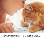 Cute Ginger Cat And Child...