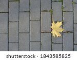 A Yellow Maple Leaf Is Lying On ...