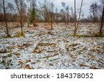 woodland with a covering of snow | Shutterstock . vector #184378052