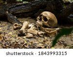Skull And Bones Buried Of Human ...