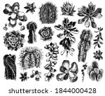 hand drawn set of cactuses and... | Shutterstock .eps vector #1844000428