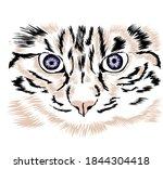 Tiger Head Close Up Vector...