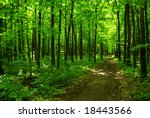 forest   Shutterstock . vector #18443566