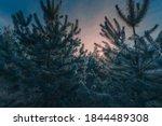 Christmas Scenery Background....