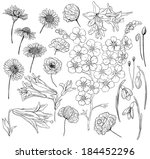 hand  drawn flowers. collection ... | Shutterstock . vector #184452296