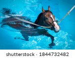 A Horse Swims At Equine...