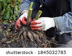 The Gardener Holds The Roots Of ...