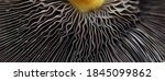 Abstract Macro Web Banner...