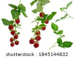 Set Of Different Raspberries....