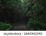 Ancient Forests In Vancouver...