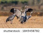 European Cranes Migration In...