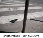 A Pigeon Crosses The Street ...