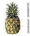 pineapple on white background...   Shutterstock .eps vector #1845809755