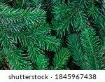 fir tree branches. winter... | Shutterstock . vector #1845967438