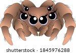 Cute Spider With Big Blue Eyes...