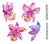 Abstract Exotic Orchid Flowers...