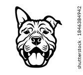 American Pitbull Terrier Dog  ...