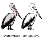 Drawing Of Standing Pelican....
