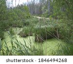 Swampy Grass In The Forest By...