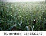 Macro Shot Of Grass Illuminated ...
