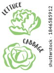 cabbage and lettuce drawing...   Shutterstock .eps vector #1846585912