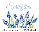 Frame Of Spring Muscari Flowers....