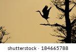 Silhouette Of Blue Heron Takin...