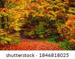 Autumn Colors. Autumn Landscape ...
