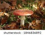 Red Mushroom Toadstool In The...