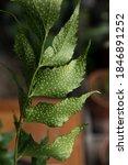 Botany. Flora Propagation....