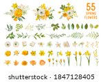 spring garden flowers  yellow... | Shutterstock .eps vector #1847128405