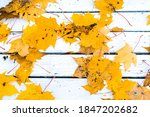 maple  yellow leaves on a...   Shutterstock . vector #1847202682