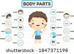 a vector set of boy body parts... | Shutterstock .eps vector #1847371198
