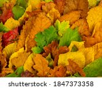 Autumn Leaves. Top View Of...