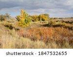 Colorado Autumn Landscape With...