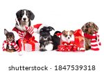 Group dogs wearing a santa hat  ...
