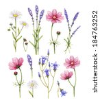 wild flowers collection.... | Shutterstock . vector #184763252