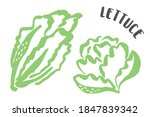 lettuce drawing hand painted...   Shutterstock .eps vector #1847839342